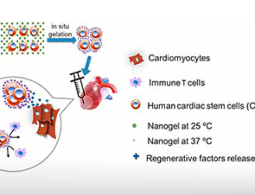 Nanogel-encapsulated stem cells for heart attack patients