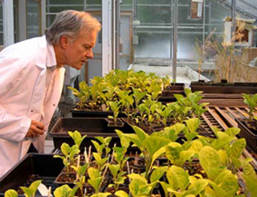 Nanotechnology might help farmers fight climate change, pests and disease–and boost yields