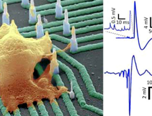 A nanowire array to screen drugs for neurodegenerative diseases