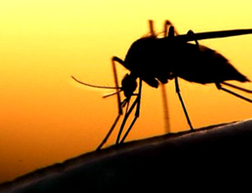 How gene-drive technology could help eradicate malaria